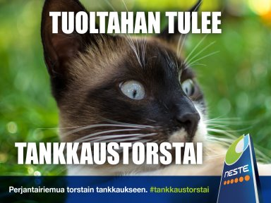 2019_33to_384x288_Neste_TankkausTorstai_Kissa
